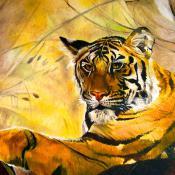 Animaux - Tigre Asiatique